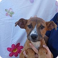 Adopt A Pet :: Dobby - Oviedo, FL