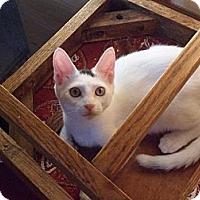 Adopt A Pet :: Ivory - Norwich, NY