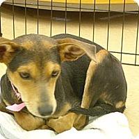 Adopt A Pet :: Emily - Windsor, MO