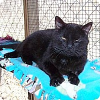 Adopt A Pet :: Joey - Dover, OH