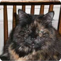 Adopt A Pet :: Wolfie - Lombard, IL