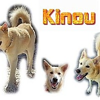 Adopt A Pet :: Kinou - Seminole, FL