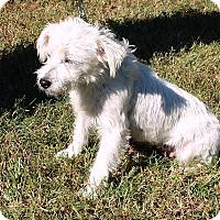 Adopt A Pet :: Sunshine - Kingwood, TX