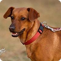 Adopt A Pet :: Rubee - Alliance, NE