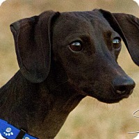 Adopt A Pet :: Deuce - Alliance, NE
