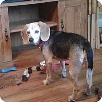 Adopt A Pet :: Sadie - Rockford, IL