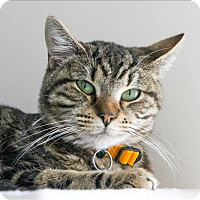 Adopt A Pet :: Squeak - San Luis Obispo, CA