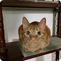 Adopt A Pet :: Brandy - Tega Cay, SC