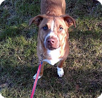 Terrier (Unknown Type, Medium) Mix Dog for adoption in Nashua, New Hampshire - Cash