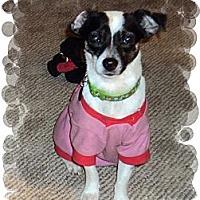 Adopt A Pet :: Dandy - Chesterfield, VA