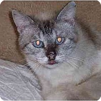 Adopt A Pet :: Katie II - Austin, TX