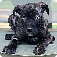 Adopt A Pet :: Johnny - South Jersey, NJ