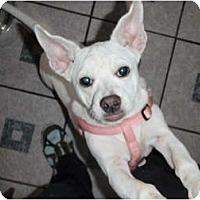 Adopt A Pet :: Annie - New Boston, NH