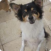 Adopt A Pet :: LilBit - N. Fort Myers, FL