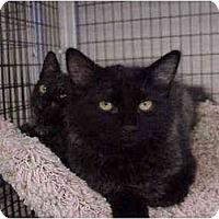 Adopt A Pet :: Saffron & Sage - Deerfield Beach, FL