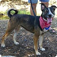 Adopt A Pet :: Sandi URGENT - Sacramento, CA