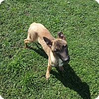 Adopt A Pet :: Luna - Denver, IN