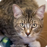 Adopt A Pet :: Linus - Fountain Hills, AZ