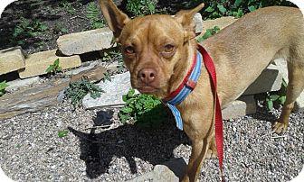 Miniature Pinscher/Chihuahua Mix Dog for adoption in Alliance, Nebraska - Oliver