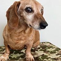 Adopt A Pet :: Sammie - Weston, FL