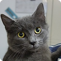 Adopt A Pet :: Kareem - Greenfield, IN