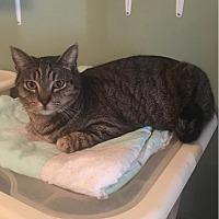 Adopt A Pet :: Grady - Temecula, CA