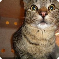 Adopt A Pet :: 338841 - Wildomar, CA