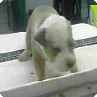 Adopt A Pet :: Sela - Fort Collins, CO
