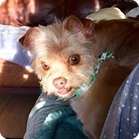 Adopt A Pet :: Mavis - Munster, IN