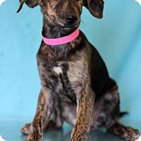Adopt A Pet :: Mazzy Star - Waldorf, MD