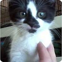 Adopt A Pet :: Paxton - Jacksonville, FL