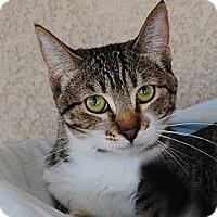 Adopt A Pet :: Nala - Palmdale, CA