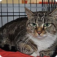 Adopt A Pet :: Amelia - Port Republic, MD