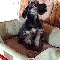 Adopt A Pet :: Andy - Crystal River, FL