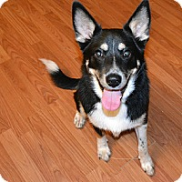 Adopt A Pet :: Bandit - Marietta, GA