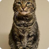 Adopt A Pet :: Robbie - Byron Center, MI