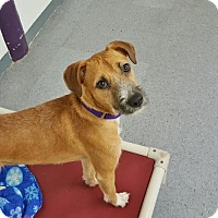 Adopt A Pet :: Chewy - Brooklyn, NY