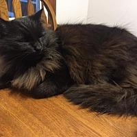Adopt A Pet :: Merlin - McConnells, SC
