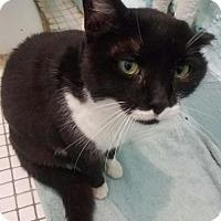 Adopt A Pet :: OAKLEY - Ridgewood, NY