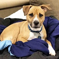 Adopt A Pet :: ZION - Hampton Bays, NY