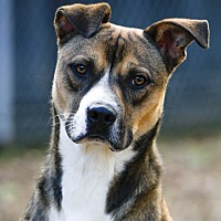 Adopt A Pet :: Fisher - Virginia Beach, VA