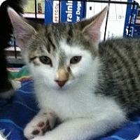Adopt A Pet :: Ryan - Riverside, RI