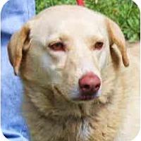 Adopt A Pet :: ChelseaPENDING - Toronto/Etobicoke/GTA, ON