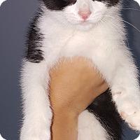 Adopt A Pet :: Isaac - Toledo, OH
