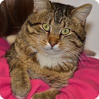 Adopt A Pet :: Carson - Ottumwa, IA