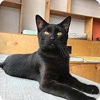 Adopt A Pet :: Eugene - St. Louis, MO