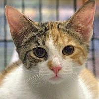 Adopt A Pet :: Fancy - Tampa, FL