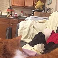 Adopt A Pet :: Sandra Dee - Spotsylvania, VA