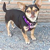 Adopt A Pet :: Bella - Santa Cruz, CA