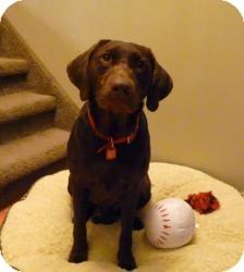 Labrador Retriever Mix Dog for adoption in Saskatoon, Saskatchewan - Duchess